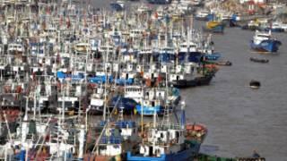 Barcos no porto devido ao tufão Muifa