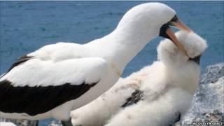 نوک سرخ دریایی