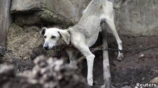 Cão (Reuters)