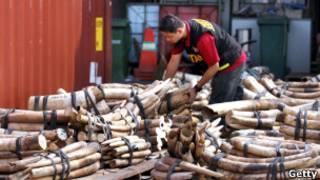 馬來西亞海關人員檢查走私象牙