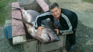 Константин Песоцкий и пойманная им акула