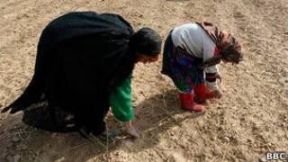 خشکسالی افغانستان