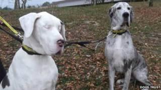 Lily e Maddison/Dogs Trust