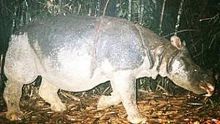 Rinoceronte de Java en Vietnam