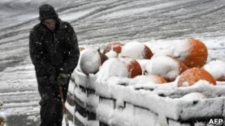 南瓜覆蓋著白雪