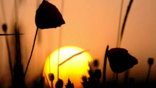sunrise_poppies_