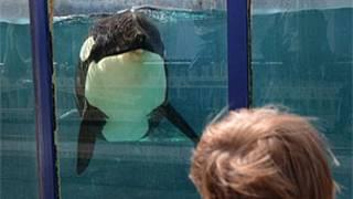 Visitante observa a baleia Morgan em cativeiro (Foto: © Dr. Ingrid N. Visser)