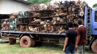Buôn lậu chó ở Thái Lan