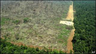 अमेज़न में वर्षा वनों की कटाई