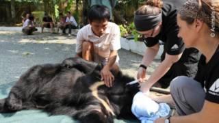Gấu nuôi ở Việt Nam