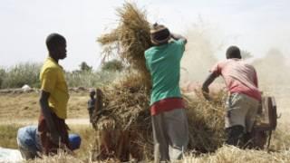 Yankin Sahel