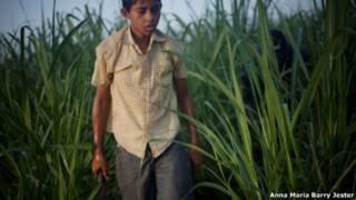 Niño en campo azucarero