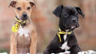Brandy e Pudding (foto: Dogs Trust)