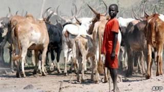 Скот в Южном Судане