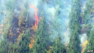 حرائق غابات في تشيلي