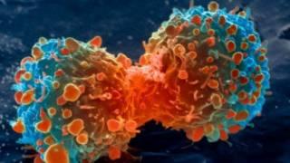 Célula cancerosa dividiéndose