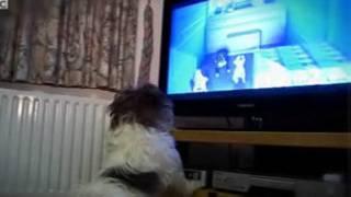 狗看狗食广告