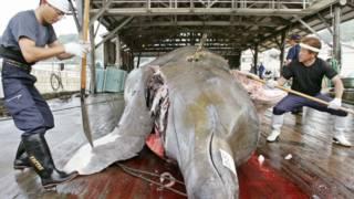 Разделка кита на японском судне