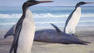 Pinguim Kairuku. Foto: Chris Gaskin / Geology Museum