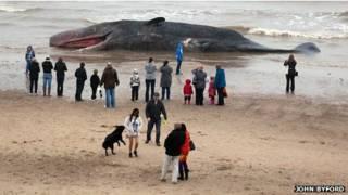 Baleia encalhada na semana passada em Skegness