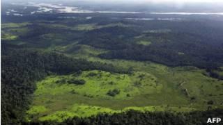 Amazônia brasileira. AFP