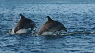 Golfinhos em Shark Bay | Foto: BBC