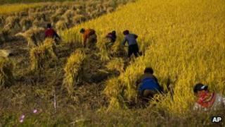 Корейские работники в поле