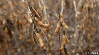 Plantação de soja.   Foto: Reuters
