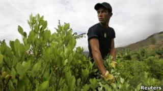 Trabalhador ajuda a erradicar plantação de coca na Colômbia, em 2007. | Foto: Reuters