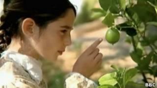 девочка и оливковое дерево