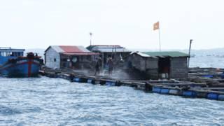 Bè cá của người Trung Quốc ở Cam Ranh (ảnh của báo Tuổi Trẻ)