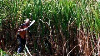 Cana de açúcar | Foto: AP