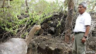 George Solitário com tratador | Crédito da foto: Dirección del Parque Nacional Galápagos