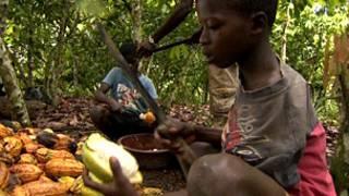 Niños trabajando en el cultivo de cacao