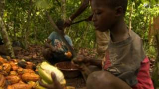 La Côte d'Ivoire est le premier producteur mondial de cacao.