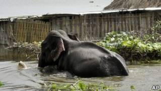 آثار الفيضانات في حديقة كازيرانغا الوطنية