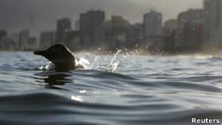 Пингвин у берегов Рио-де-Жанейро