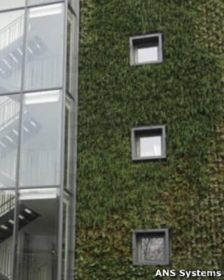 plantas_calles_paredes
