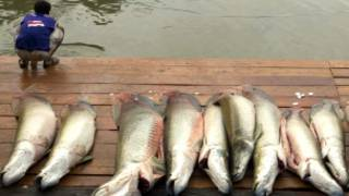 मछलियाँ