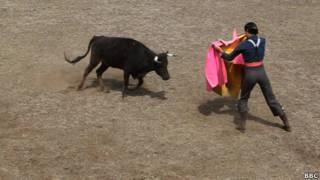 Бои быков в Мексике