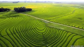 Plantaciones de arroz en Uruguay Foto Neil Palmer CIAT