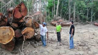 Residentes locales mostrando madera talada de forma ilegal