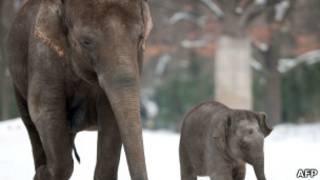 Слоны в зоопарке Берлина