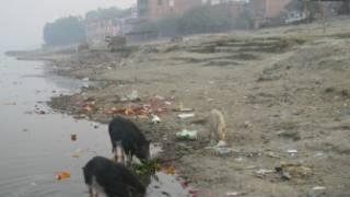 कानपूर में गंगा नदी