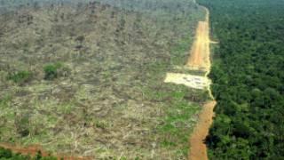 Desmatamento (AP)