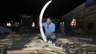 Gading gajah yang disita di Kenya