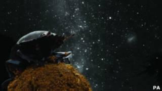Навозный жук на фоне звездного неба
