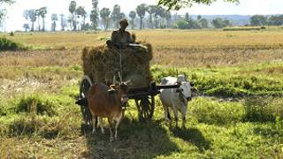 Burma Farmers