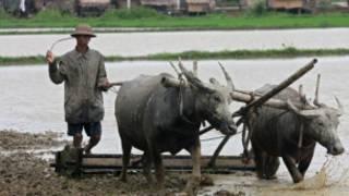 A Burmese Farmer