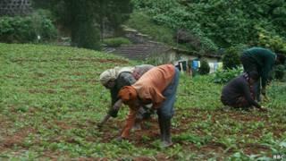 भारत में कृषि